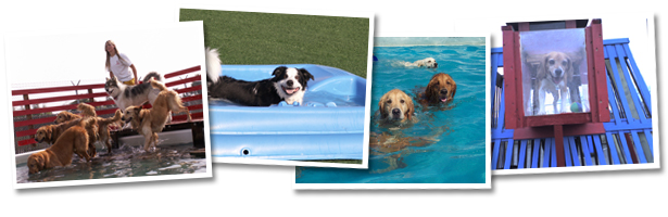 Best Dog Daycare And Dog Boarding In Northern California